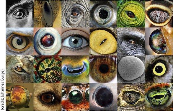 Sentientism Eyes