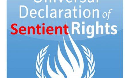 Universal Declaration of Sentient Rights